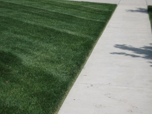 Edging the turf on a weekly basis, creates a defined edge between grass and paved surfaces.