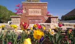 Spring tulips flowering at Hawthorne 2 Entrance